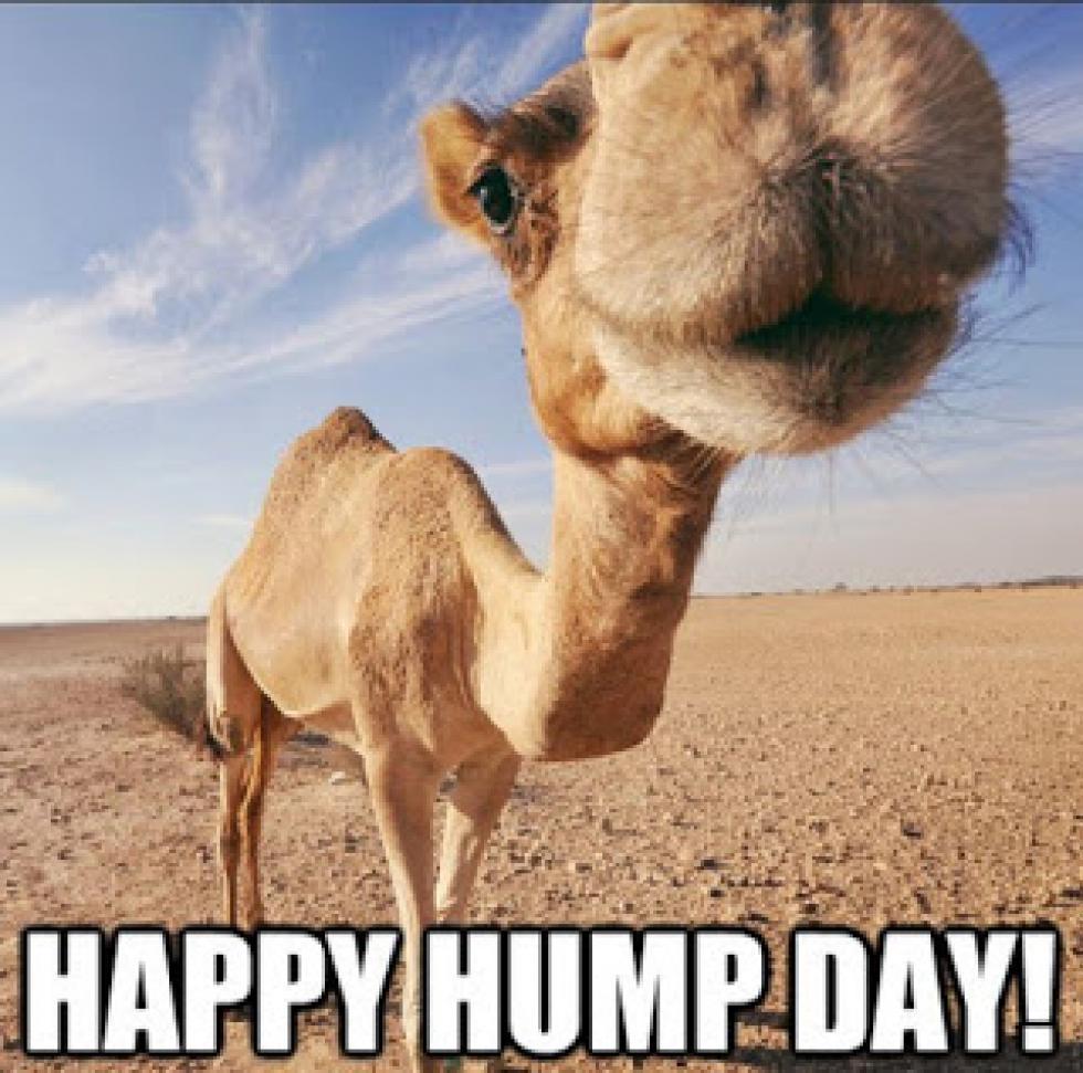 Day hump pics happy